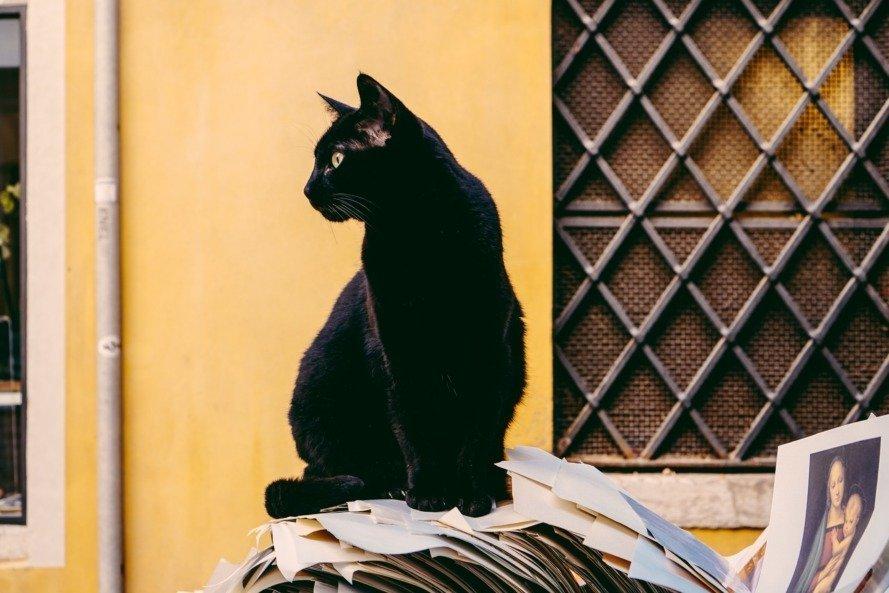 preparing my finances to adopt my first pet